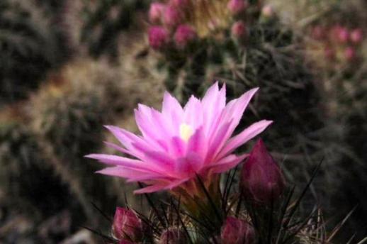 Flora at Kalimpong